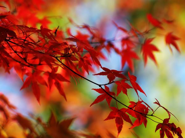 Осенний листопад скрипт