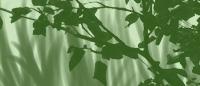 Кисти Листья и трава