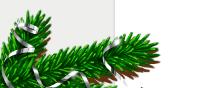 Ветки елки для сайта
