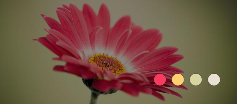 7 сервисов по подбору цветовой гаммы для сайта