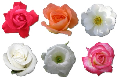 Иконки Розы